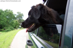 dog-sticking-his-head-out-the-window2