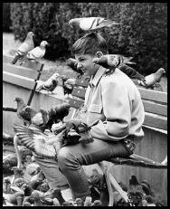 Union Square pigeons